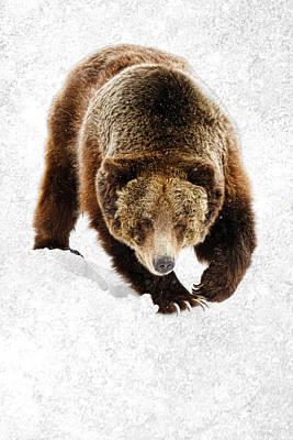 Photograph - Cold Winter Griz by Steve McKinzie