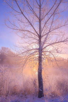 Cold Winter Morning Print by Darren  White