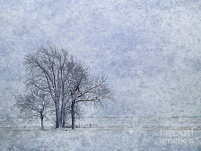 Photograph - Coldness by Tim Good