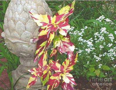 Photograph - Coleus - Finger Paint by Rod Ismay
