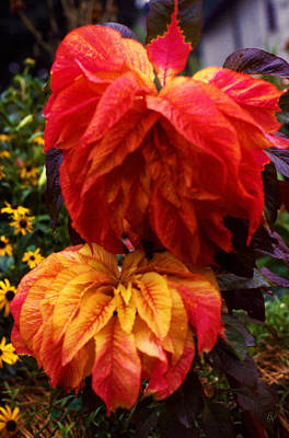 Thomas Kinkade Rights Managed Images - Coleus 01 Royalty-Free Image by Lee Newell