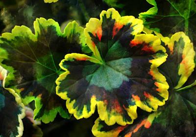 Photograph - Coleus 2 by Deena Stoddard