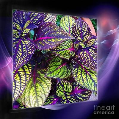 Photograph - Coleus Abstract by Becky Lupe