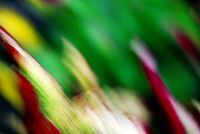 Photograph - Coleus In Abstract by Jp Grace