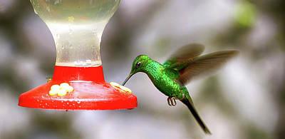 Colibri Hummingbird On Bird Feeder Art Print