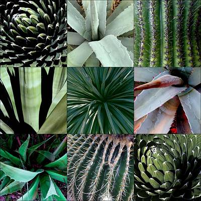 Photograph - Collage D'cacti by Marlene Burns