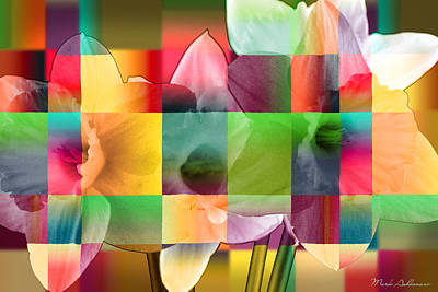 Vision Photograph - Collage For Sunny Day   by Mark Ashkenazi