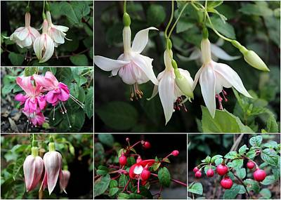 Photograph - Collage Fuchsia by Helene U Taylor