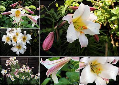 Photograph - Collage Lilium Regale by Helene U Taylor