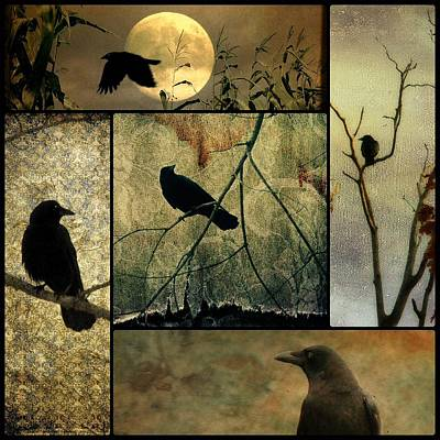 Collage Of Five Crows Print by Gothicrow Images