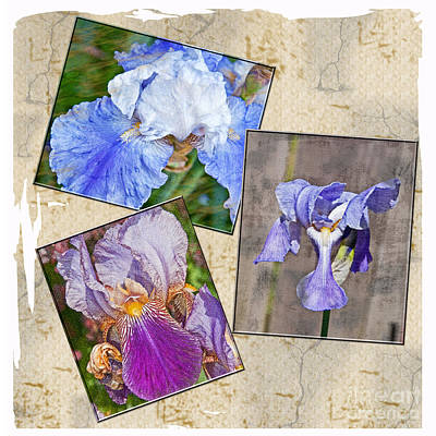 Photograph - Collage Of Textured Iris Flowers Art Prints by Valerie Garner