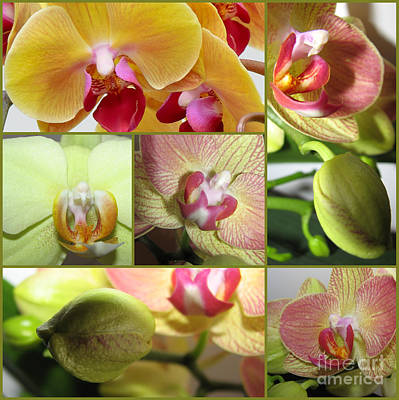 Collage Orchids 01yellow Green - Elena Yakubovich Art Print by Elena Yakubovich