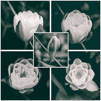 Photograph - Collage Water Lily by Yvon van der Wijk