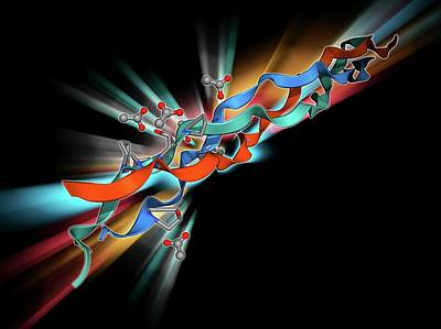 Molecular Structure Photograph - Collagen-like Molecule by Laguna Design