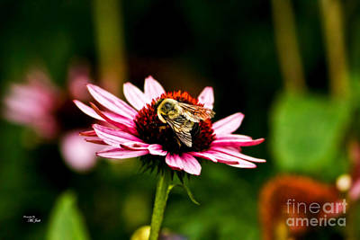 Western Art - Collecting Pollen by Ms Judi
