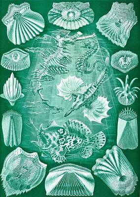 Fish Underwater Drawing - Collection Of Teleostei by Ernst Haeckel