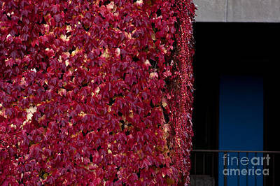 Photograph - College Campus With Fall Colors by Jim Corwin