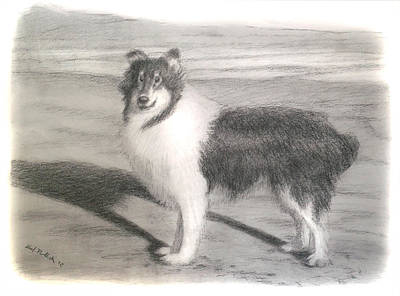 Collie Dog Portrait Art Print