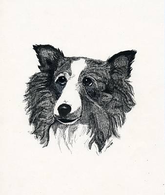 Collie Dog Original