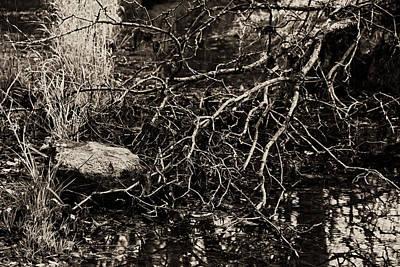 Photograph - Collins Creek Landscape Iv by Jim Vance