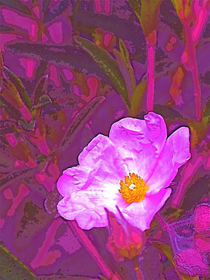 Color 2 Art Print by Pamela Cooper