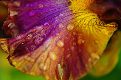 Color And Droplets Art Print by Jeff Swan