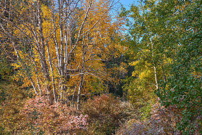 Photograph - Color Burst Along The Little Spearfish by Dakota Light Photography By Dakota