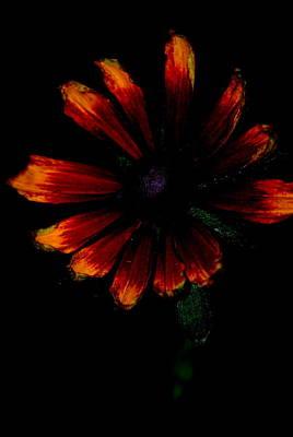 Digital Art - Color Burst by Kathy Sampson