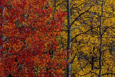 Photograph - Color Changes by Ernie Echols