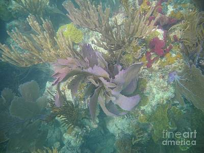 Photograph - Color Corals by Adam Jewell