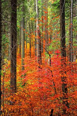 Photograph - Color Filled Forest by Lynn Bauer