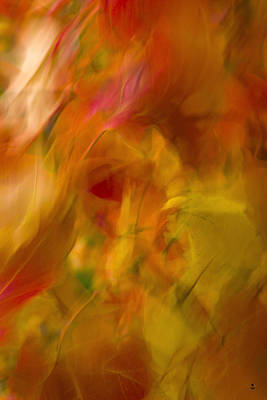 Photograph - Color Flow by Minartesia