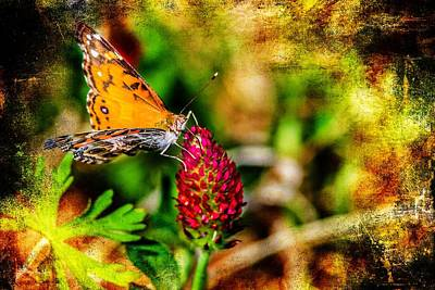 Photograph - Butterfly - Macro - Color In Clover by Barry Jones