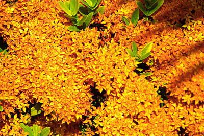 Photograph - Color It Orange by Bj Hodges