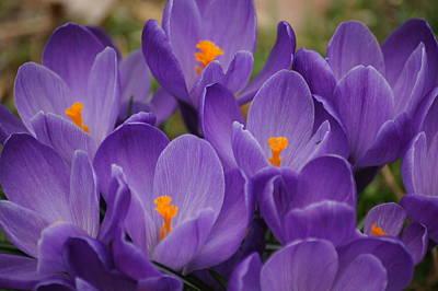 Photograph - Color It Violet by Bj Hodges