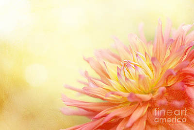 Photograph - Color Me Happy by Beve Brown-Clark Photography