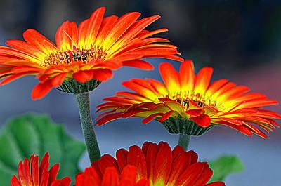 Photograph - Color Me Happy......... by Tanya Tanski