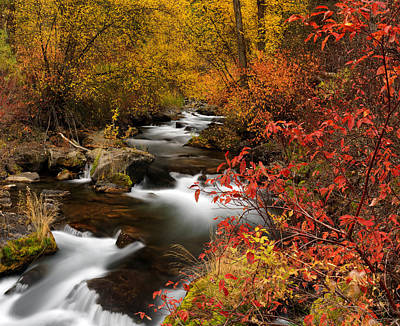 Snake River Photograph - Color Of Autumn by Leland D Howard