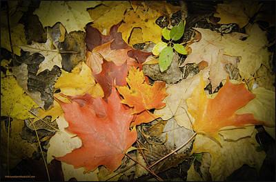 Photograph - Color Of Fall by LeeAnn McLaneGoetz McLaneGoetzStudioLLCcom