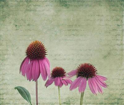 Kim Photograph - Color Of Spring by Kim Hojnacki