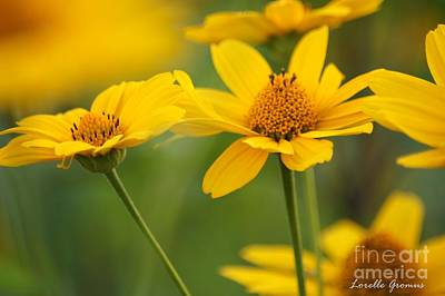 Photograph - Color Of The Sun by Lorelle Gromus
