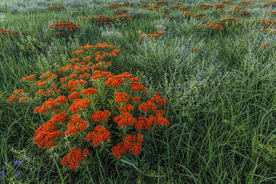 Photograph - Color On The Prairie by Scott Bean