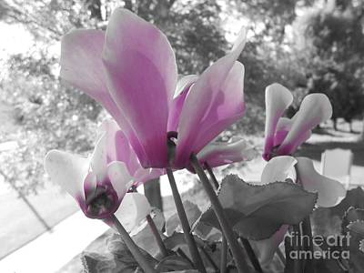 Photograph - Color Pop  by Bridgette Gomes