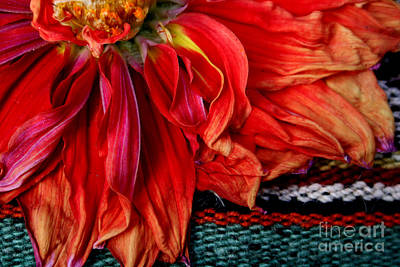 Photograph - Color Power by Jeanette French