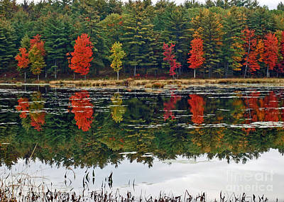 Photograph - Color Reflection by Terri Oberg