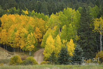 Photograph - Colorado Aspen Country Road by Jeanette French