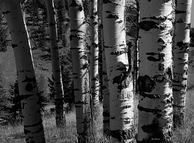 Photograph - Colorado Aspen Grove II  by John Pagliuca
