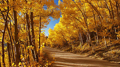 Still Life Photograph - Colorado Aspen Tunnel  by Michael J Bauer