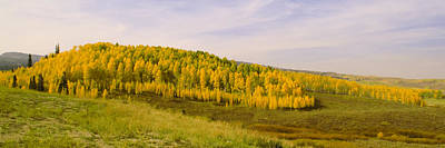 Photograph - Colorado Aspens by Brian Harig