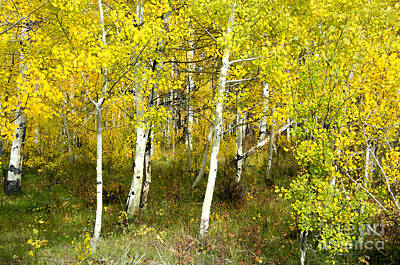 Fort Collins Photograph - Colorado Autumn by Baywest Imaging